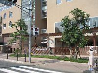 050910大野田小02.jpg