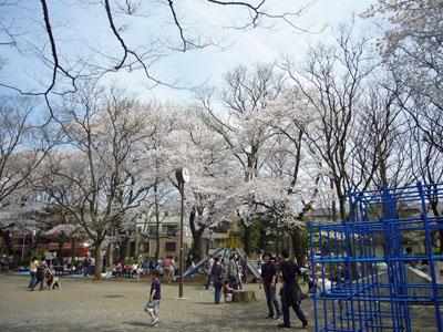 070401西荻窪・桜03.jpg