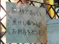 070727福ちゃん02.jpg