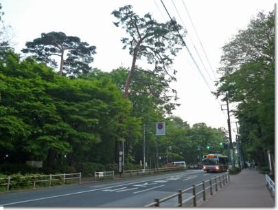 080427井の頭公園02.jpg