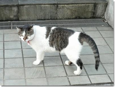 081129猫01.jpg