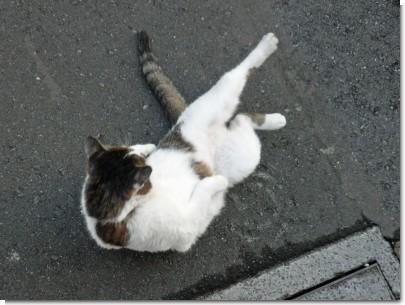 081129猫03.jpg