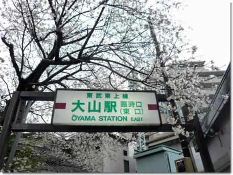 100325大山駅桜01.jpg